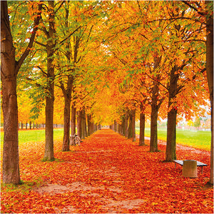 Fall into Autumn with Ease: Your 5 Step Guide
