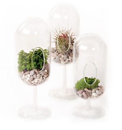 A Symphony of Terrariums