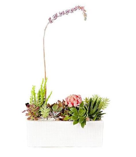 Succulents in White