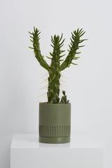"5"" Capra Designs Etch Pot in Agave"