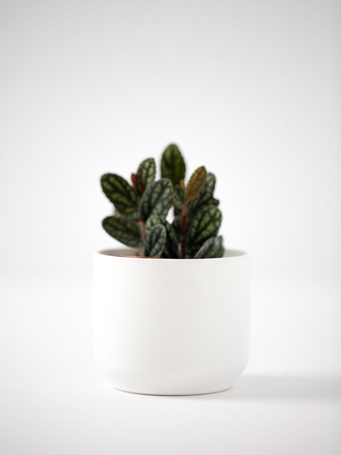 "3"" Cylinder Pot in White"