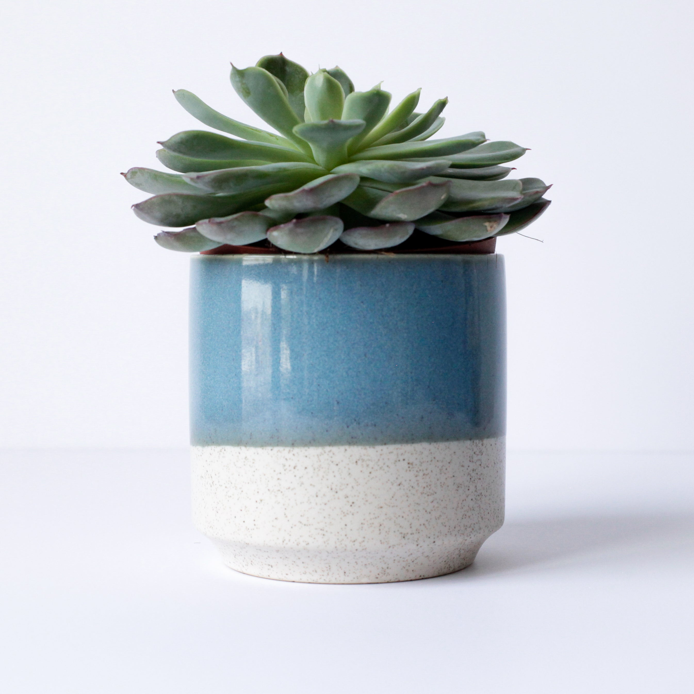 "4"" Striped Pot in Speckled Turquoise & Vanilla"