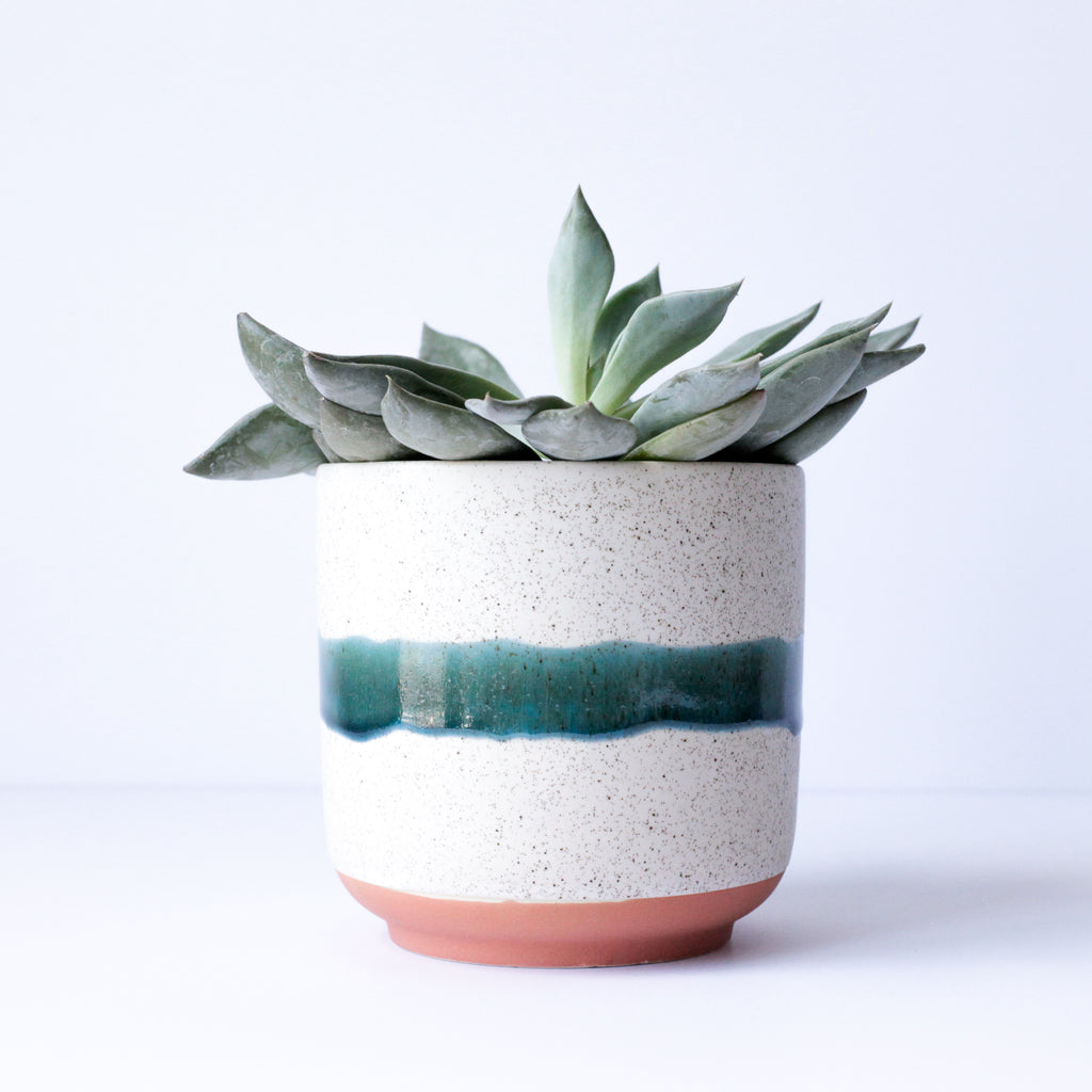 "4"" Striped Pot in Speckled Vanilla & Mariner Green"