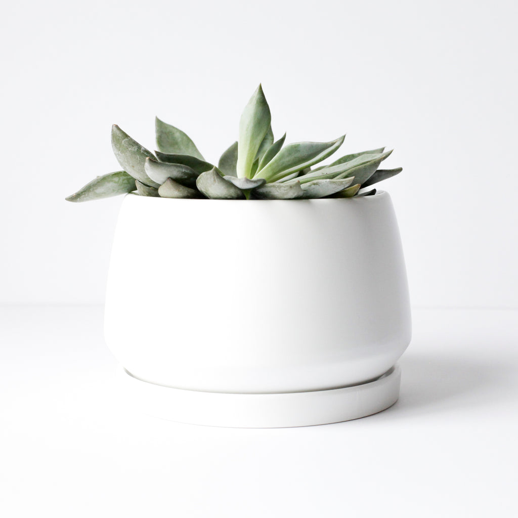 "6"" Shallow Ceramic Pot in White"