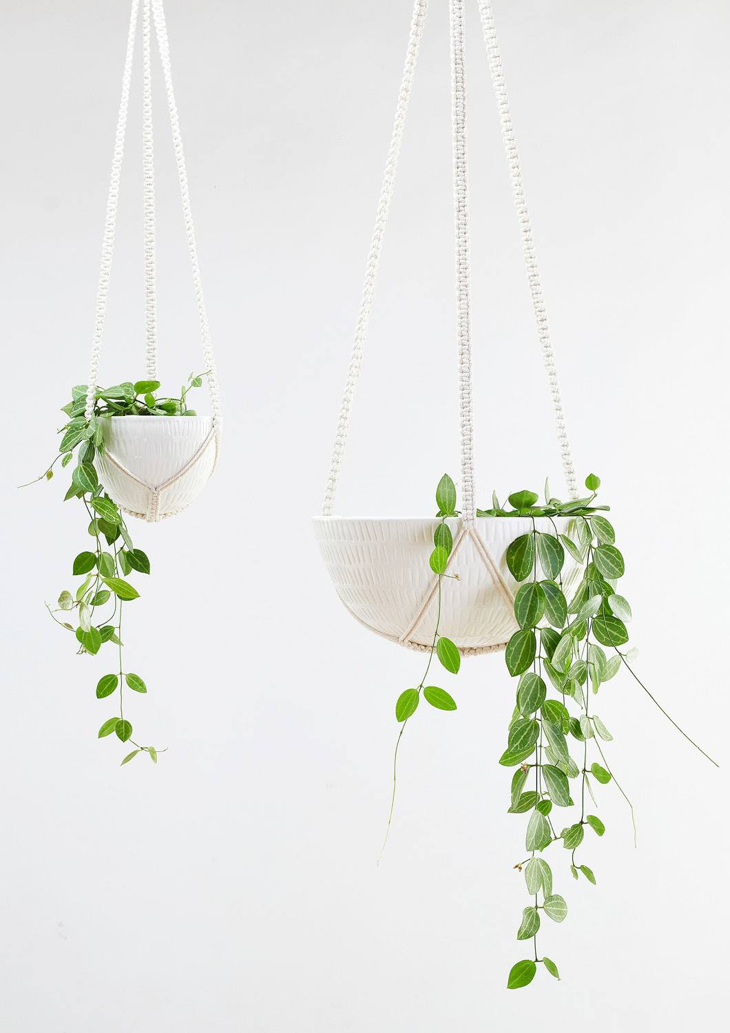 "6"" Angus & Celeste Macrame Hanging Planter in White"