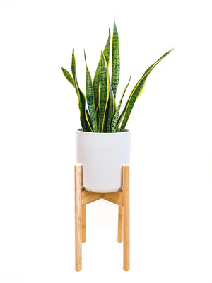 "Decluttered Top Level 8-12"" Adjustable Plant Stand in Natural"