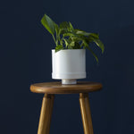 "5"" Loop Living Cylinder Planter in White"