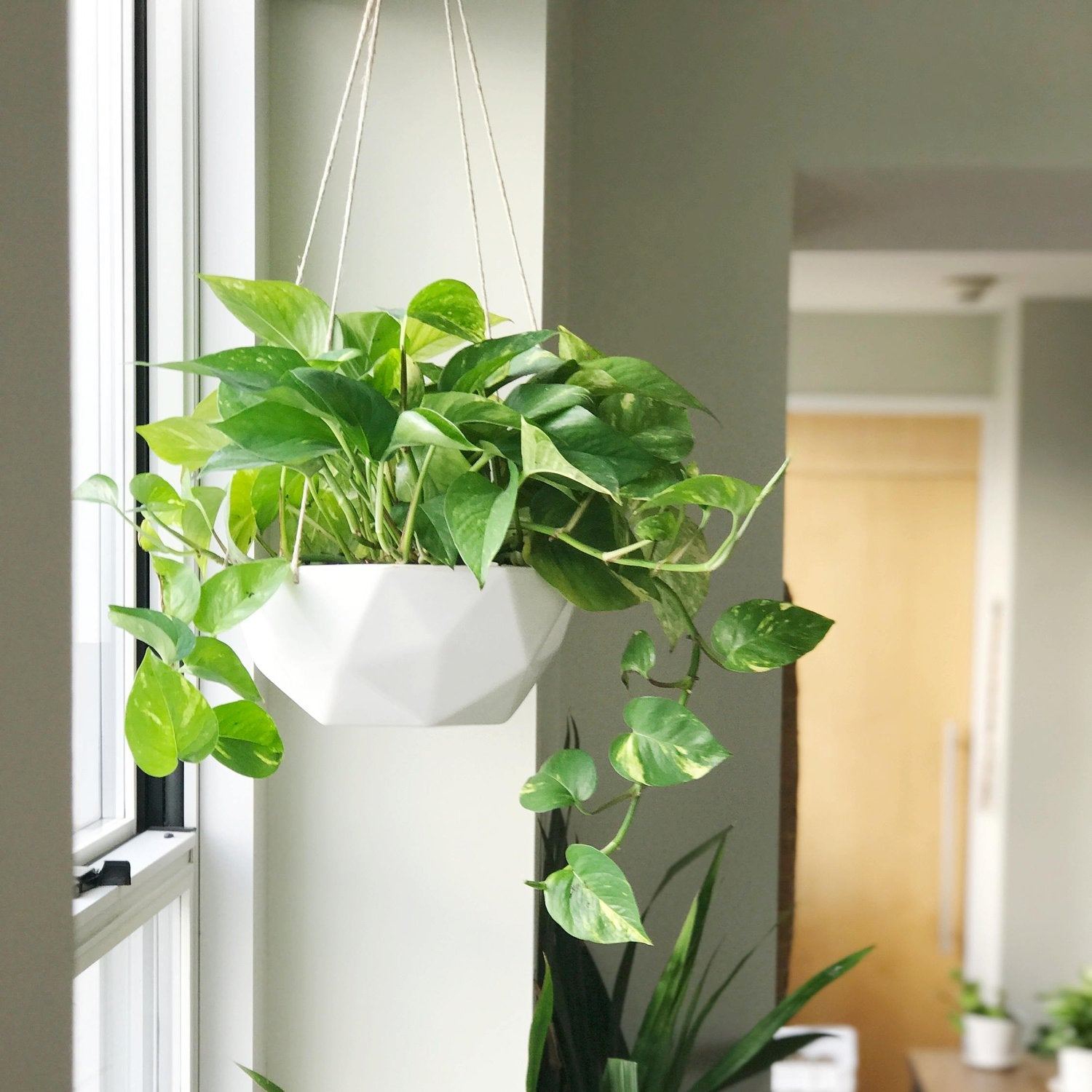 "10"" Convivial 2V Hanging Planter in Ivory"