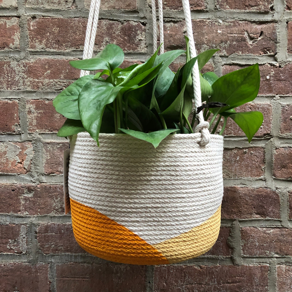 "6"" Closed Mondays Hanging Planter in Yellow"