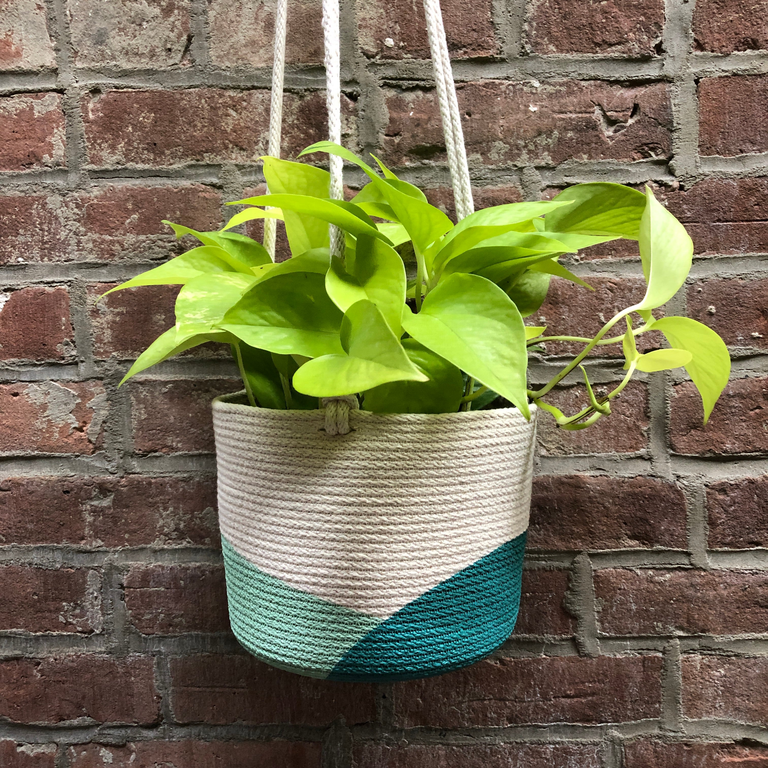 "6"" Closed Mondays Hanging Planter in Teal"