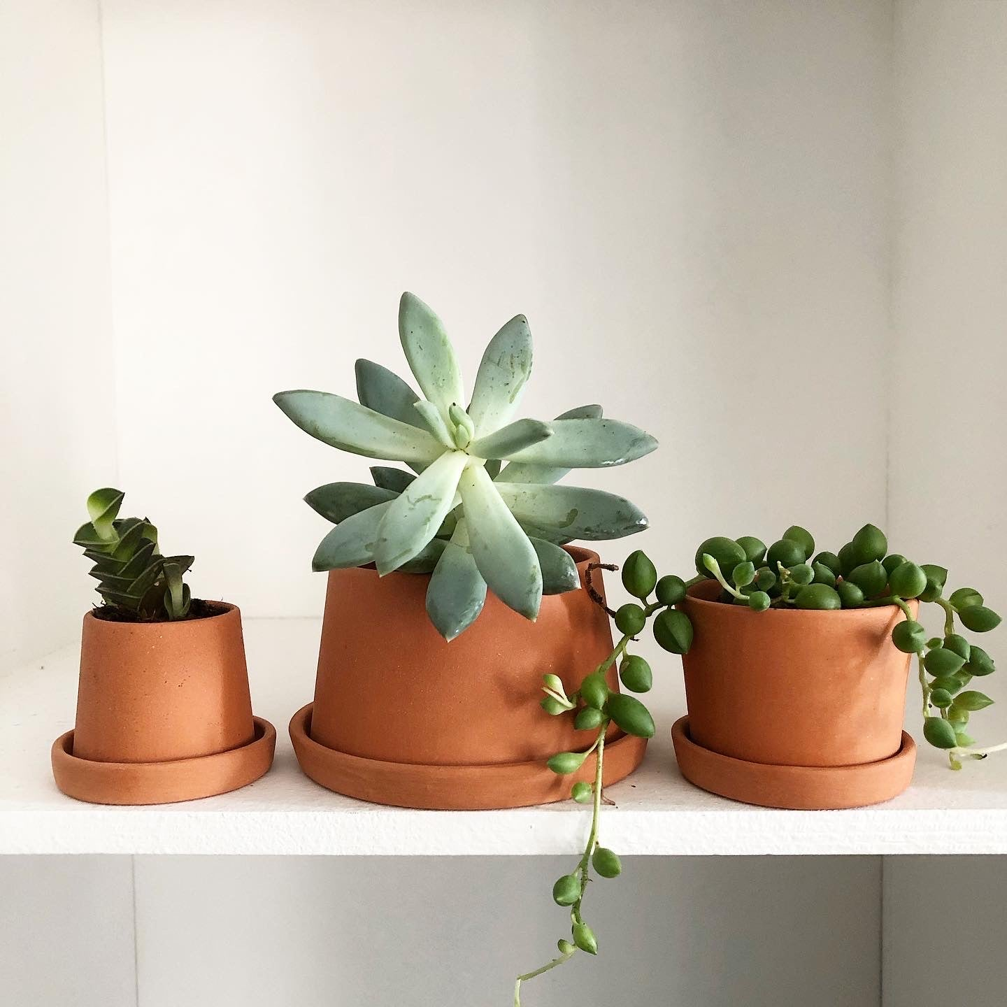 Tiny Succulent Jungle + Michiko Shimada Terracotta