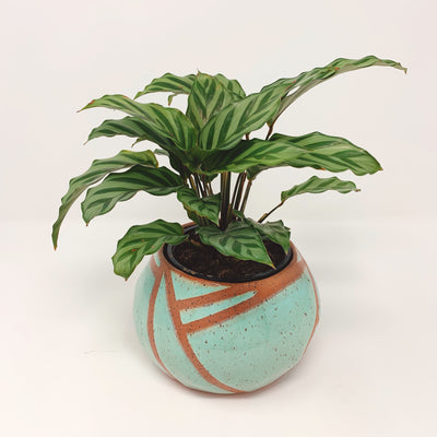 Pu'u Planter Mint
