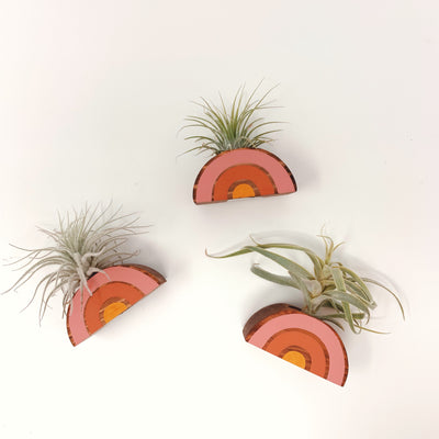 Rainbow & Air Plant Magnet