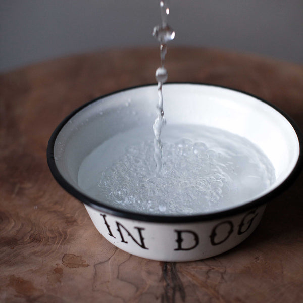 Dog Bowl - In Dog We Trust