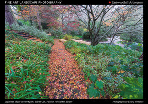Japanese Maple covered path, Scarlet Oak, Pavilion Hill Golden Border