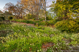 Springtime at the Homestead Gardens, Eastwoodhill Arboretum