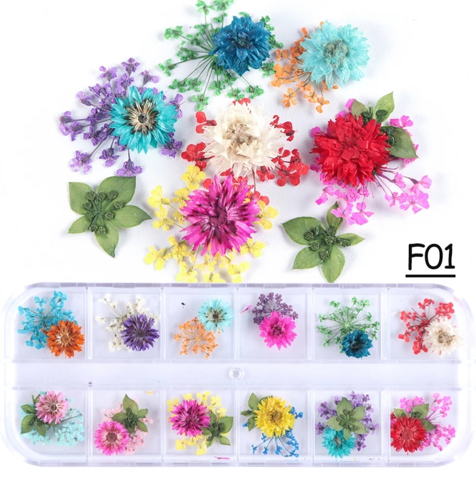 Mix Pressed Dried Flowers #F01