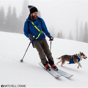 Skiing-with-dogs. Dogs-that-ski