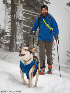 Dog-gear. Skiing-with-dogs. Chest-and-underbelly-protection-for-dogs. Dog-snow-protection. Backcountry-skiing-with-dogs. Winter-dog-gear.