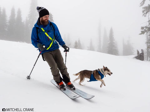 Dog-gear-for-snow. Skiing-with-dogs. Skijoring-with-dogs. Outdoor-dog-gear-for-snow.