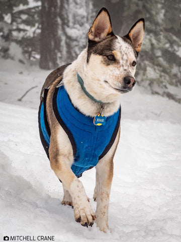 Dog-gear-for-snow. Outdoor-dog-gear. Adventure-gear-for-dogs. Skiing-with-dogs.