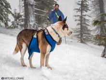 Dog chest and underbelly protection a harness. Dog snow vest. Dog harness with chest protector.