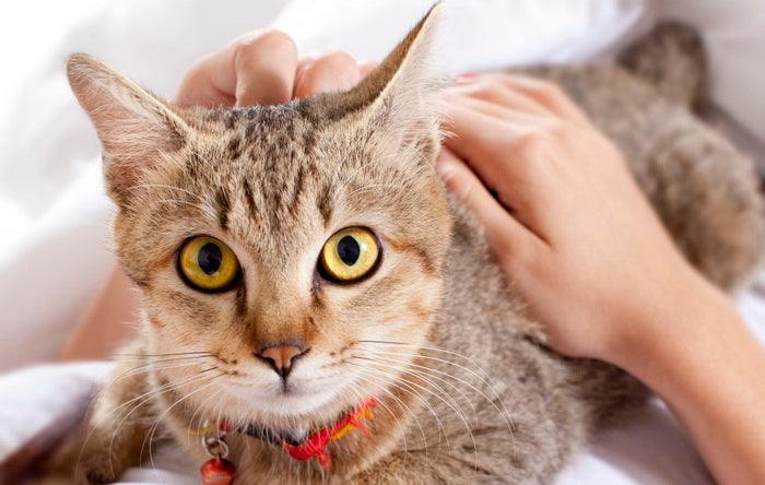 3 Ways Cats Show Their Love/Affection
