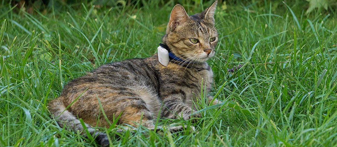 Best Cat GPS Trackers