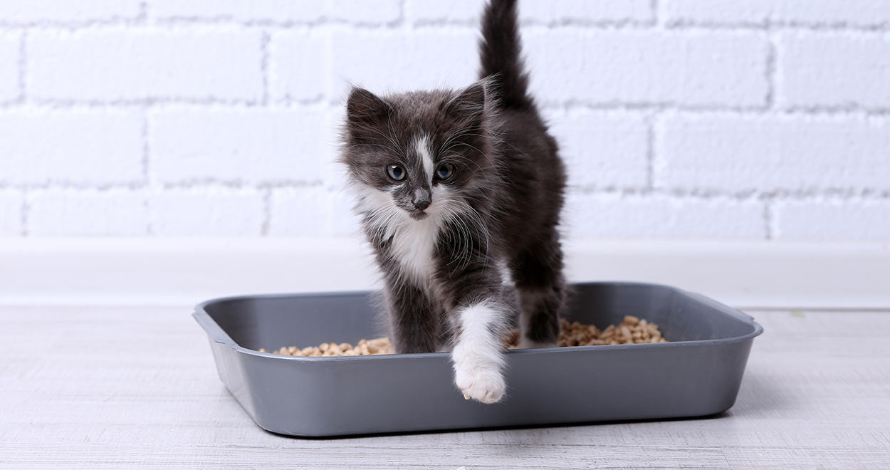 Best Eco Friendly Natural Cat Litter (Coconut and more)