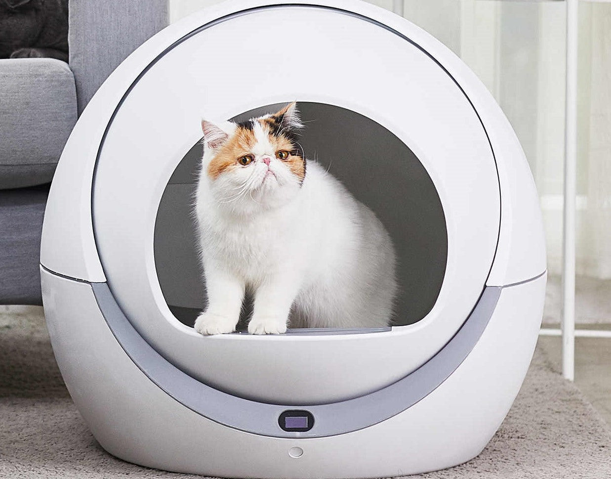 Best Self Cleaning Litter Boxes Cat Cave Co