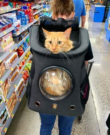 Fat Cat Backpack Carrier
