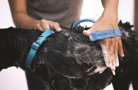 The Aquapaw Pet Bathing Tool