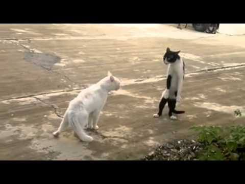 Cats Want to Intimidate and Repel Predators