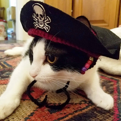 Pirate Hat for Cats & Dogs