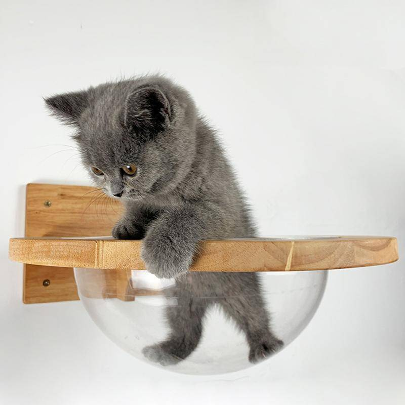 Floating Bubble | Cat Wall Furniture