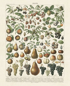 Fruits Lithograph