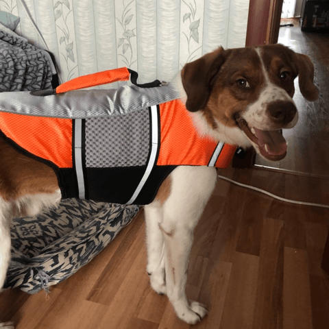Dog Life Jacket Vest Floaties Flotation Puppy