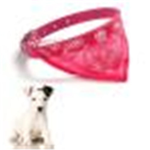 Small puppy pet collar with scarf Cut Cat