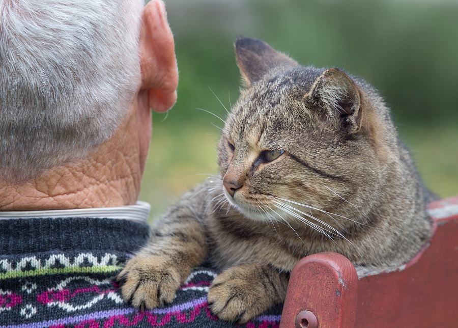 A senior cat with owner