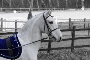 Muscle Maintenance for Horses gives dressage horse muscle support