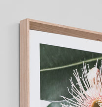 Load image into Gallery viewer, Framed Print- Eucalyptus Flower 2
