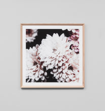 Load image into Gallery viewer, Framed Print- Flowering Muse 1