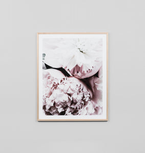 Framed Print- Light Bloom 2