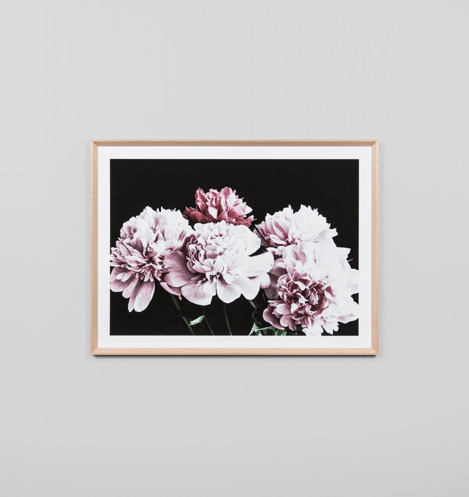 Framed Print- Blush Peonies