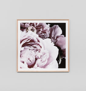 Framed Print- Dark Bloom Square Print