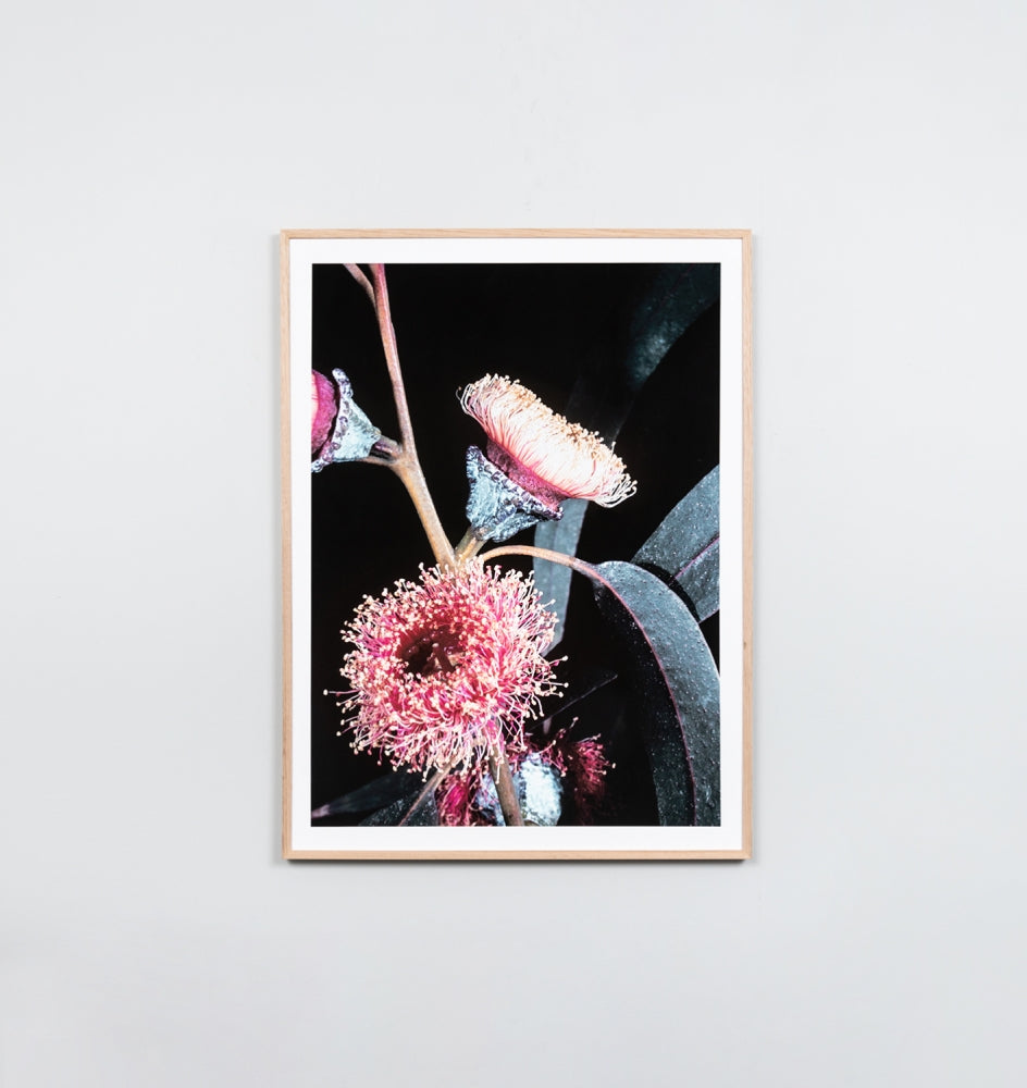 Framed Print- Eucalyptus Bunch