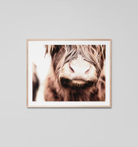 Framed Print- Highland Cow