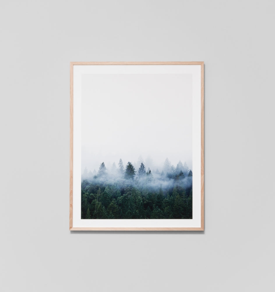 Framed Print- Redwood Forest