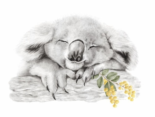 Hannah Alford - Fire Relief Finley Koala Art Wattle Illustration
