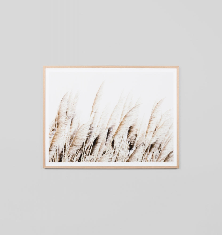Framed Print- Pampas Breeze